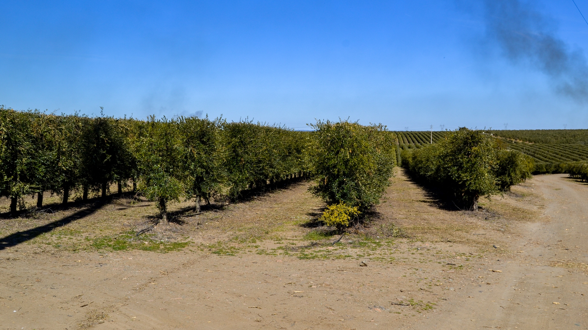 86ha Estate with olive groves in Ferreira do Alentejo, Beja - Lower Alentejo | PPR279 The 'Herdade do Olival Mayor' has a global area of ​​86.5 hectares, of which only 78.5 hectares are completely filled by Olive.